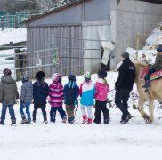 Kindergeburtstag mit Pferden